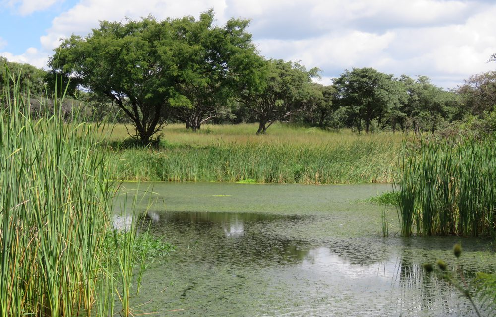 The Value of Wetlands