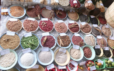 Adapted seeds: The missing link in the fight against drought